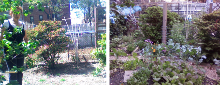 Before/After Extenstion of Garden